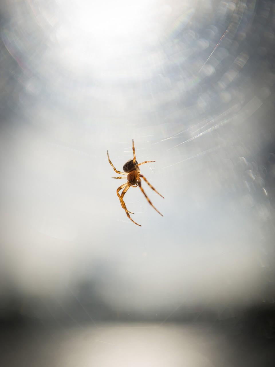 Spider_3237