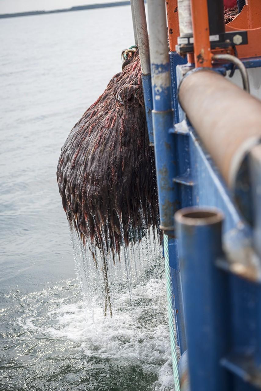 Ostseefischerei
